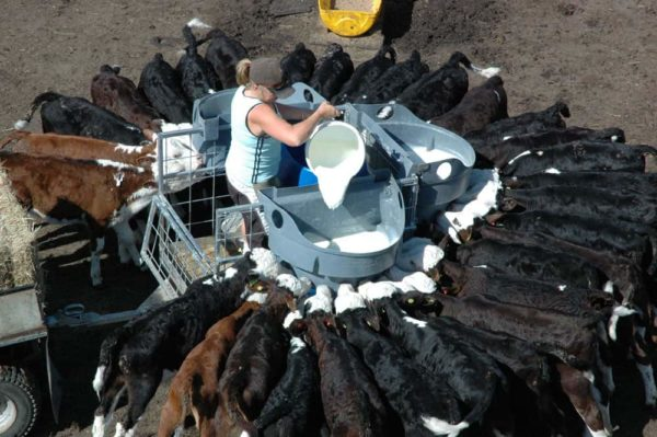 Calf Feeders - Milk Feed Trailer